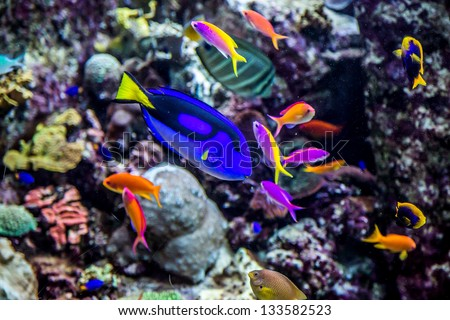Photo of a tropical fish on a coral reef in aquarium - stock photo