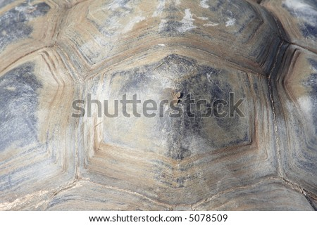 photo of a turtle texture - stock photo