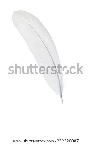Photo of a White feather quill pen isolated on a white background. - stock photo