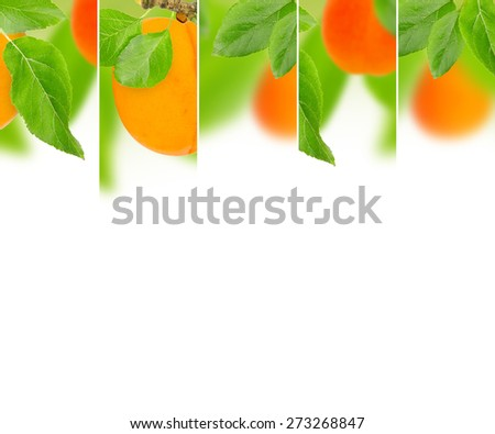 Photo of abstract apricot mix with white space for text - stock photo