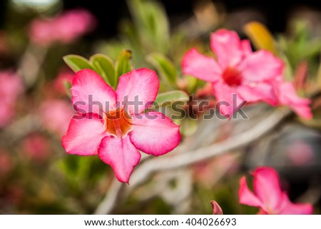 Photo of beautiful bright pink blossom, abstract natural background, fine art, spring time season, pink blooming in sunny day, floral wallpaper, soft focus, little pink flowers on tree branch - stock photo