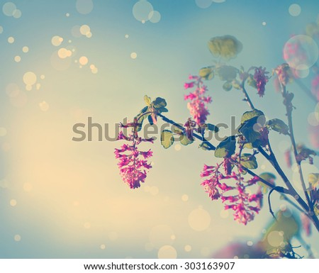 Photo of beautiful bright pink blossom, abstract natural background, spring time season, pink blooming in sunny day, floral wallpaper, soft focus, little pink flowers on tree branch. - stock photo