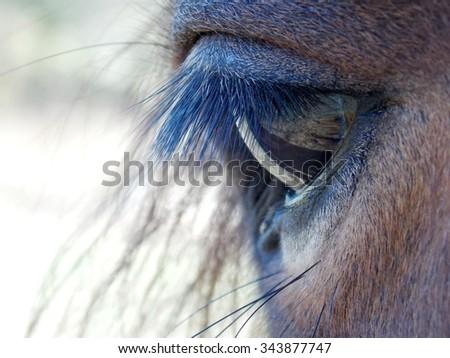 Photo of beautiful brown horse eye detail - stock photo
