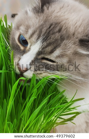 Photo of cat chewing a grass - stock photo