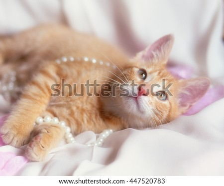 photo of cute ginger kitten with pearl and rose petals - stock photo