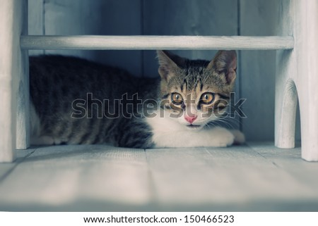 Photo of cute kitten under the bench - stock photo