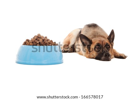 Photo of dog next to his full bowl who doesn't eat - stock photo