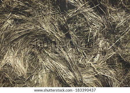 Photo of dry grass located on a meadow after the winter. Photos from the top. The grass like waves on a stormy sea. - stock photo