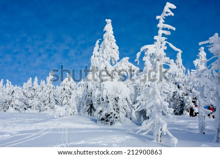 Photo of frost nature with flock cold snow - stock photo