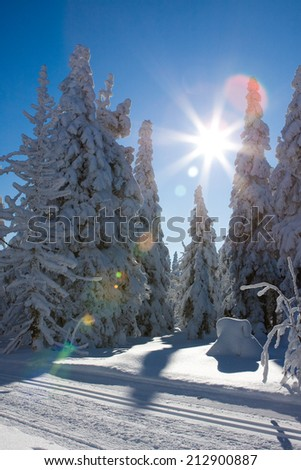 Photo of frost nature with flock cold snow and sunshine - stock photo