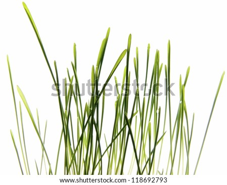 Photo of Grass isolated on White/Green grass isolated on White/Grass isolated on White - stock photo