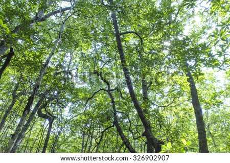 Photo of green fertile mangrove forests of Sabah, Borneo. Photo taken from inside the forest with low light. - stock photo