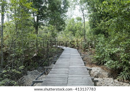 Photo of green fertile mangrove forests with wooden bridge of Sabah, Borneo. Photo taken from inside the forest with low light. - stock photo