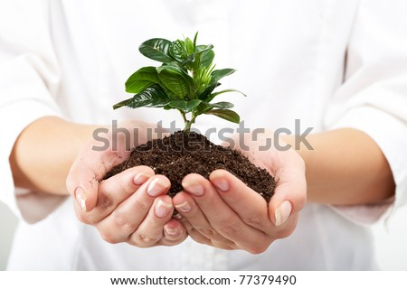 Photo of human hands holding little sprout with care - stock photo