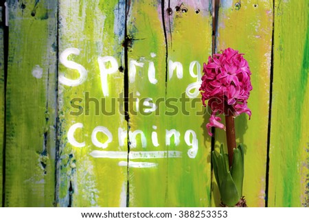 Photo of hyacinth flower with wooden background - stock photo