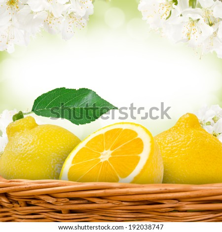 Photo of lemons in basket with blossom background - stock photo
