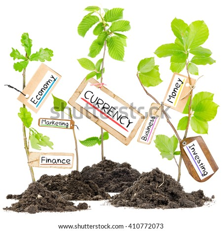 Photo of plants growing from soil heaps with CURRENCY conceptual words written on paper cards - stock photo