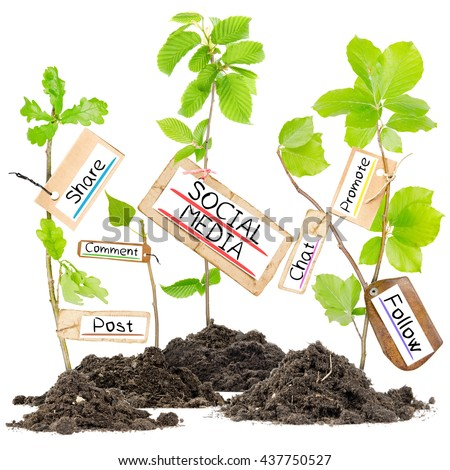 Photo of plants growing from soil heaps with SOCIAL MEDIA conceptual words written on paper cards - stock photo