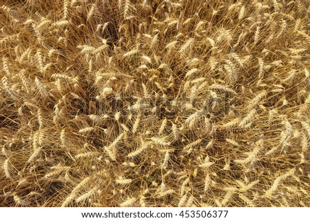 Photo of ripe wheat field from above - stock photo