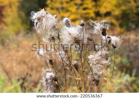 Photo of Russian flower in autumn forest - stock photo