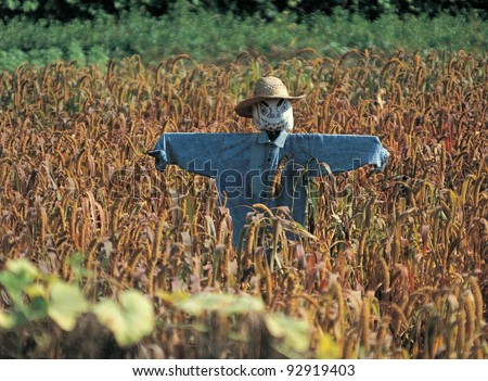 Photo of scarecrow in corn field on a sunny day - stock photo
