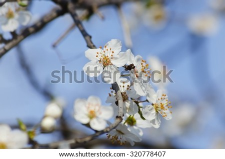 Photo of  Spring Blossom Tree  Flower Background - stock photo