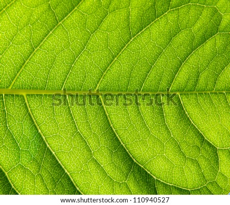Photo of surface of green leaf, macro - stock photo
