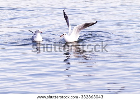 Photo of the seagull in the lake - stock photo