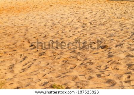 Photo of the sunny summer sandy beach  - stock photo