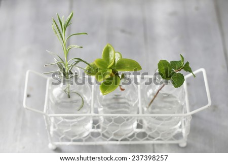 Photo of three bottles with plants - stock photo