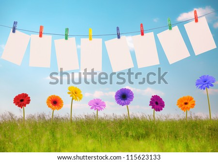 Photo on rope and flowers - stock photo