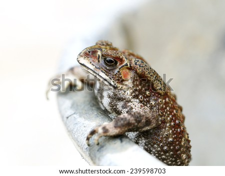 photo portrait of an exotic tropical toad  - stock photo