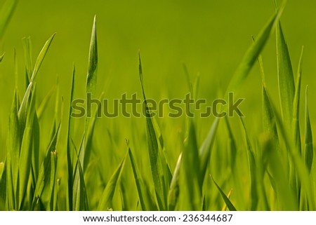 Photo shows details of green grass halms lighted by sun. - stock photo