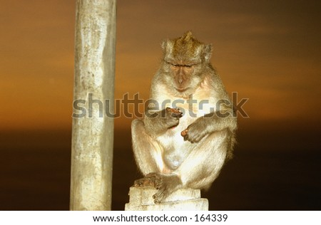 Photo taken at the Temple of the Monkey in Bali (Indonesia) - stock photo
