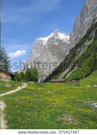 Photo taken in the Grindelwald valley, Switzerland in late Spring.  - stock photo