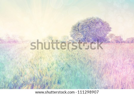 Photo with bright rural landscape - stock photo