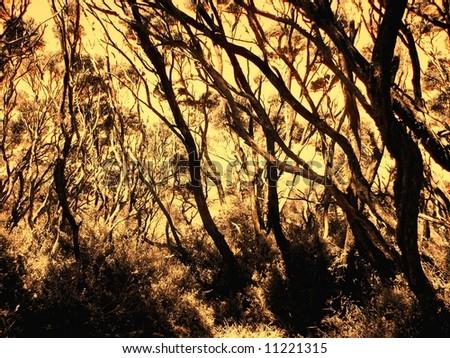 Photograph featuring coastal vegetation on a cliff at Cape Schanck (Mornington Peninsula, Australia). - stock photo