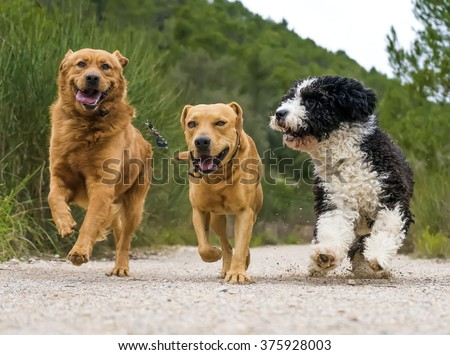 photograph of a dogs running - stock photo