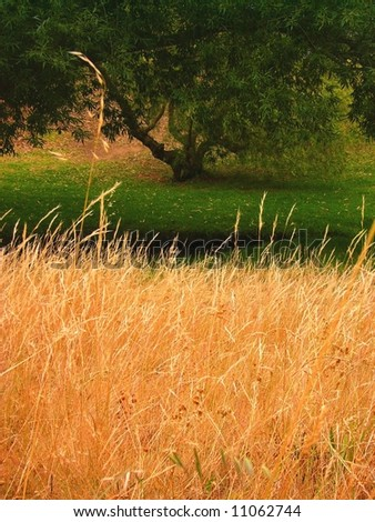 Photograph taken of long dry grass with a green lawn in the background under a low tree (Willunga Nature Reserve, South Australia). - stock photo