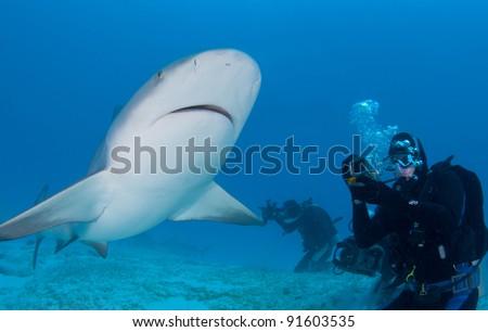 photographer has a bull shark swim in close - stock photo