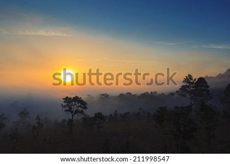 photographer shooting sunrise in the forest - stock photo
