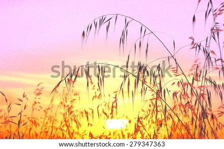 Photographic image with saturation effects of oat field at sunrise - stock photo