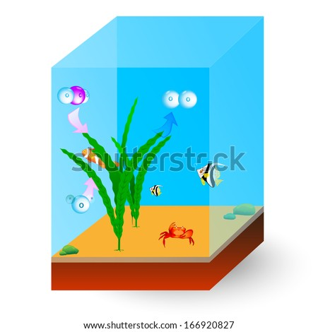 Photosynthesis and Respiration in Aquatic Plants. Fish, crab and other inhabitants of the sea. During photosynthesis, carbon dioxide is absorbed and oxygen liberated.  - stock photo
