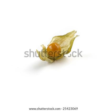 Physalisisolated on white background - stock photo