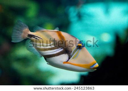 Picasso fish - stock photo