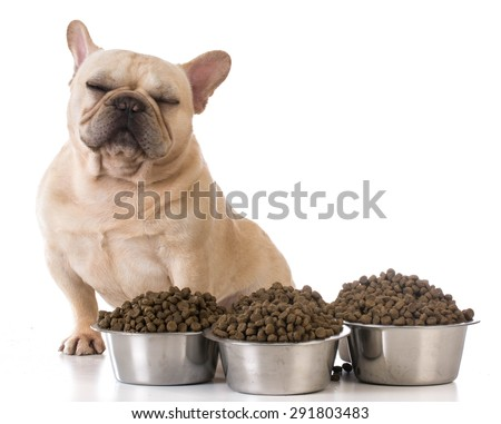 picky eater - french bulldog refusing to eat on white background - stock photo