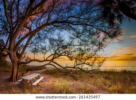 Picnic bench under tree on Manasota Key - stock photo