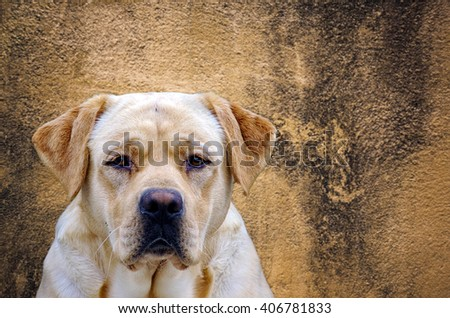 Picture of a dog with an amazing background - stock photo