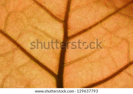 Picture of a Leaf against to the sun light - stock photo