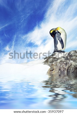 Picture of a penguin - stock photo